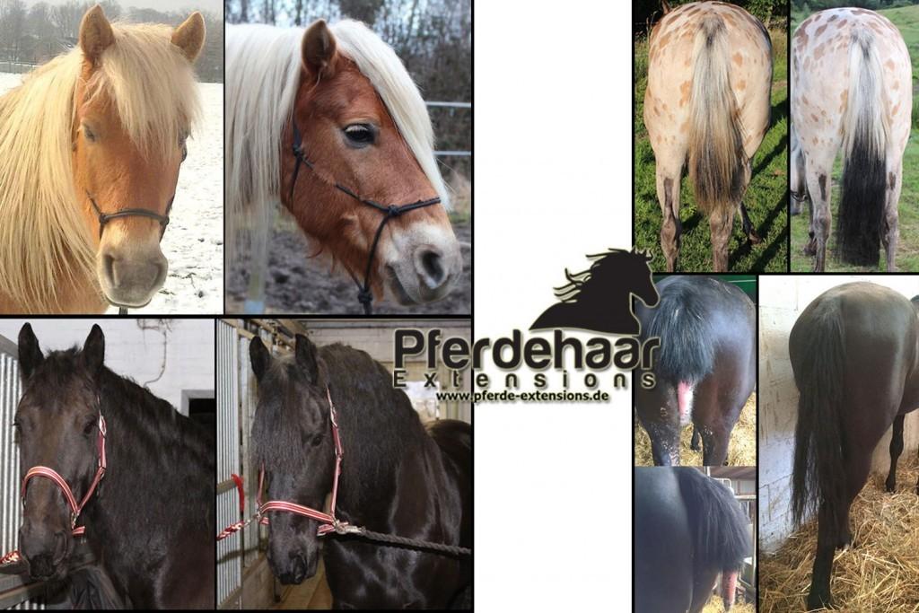 Titelbild Pferdehaar Extensions Mähne, Schweif & Schopf