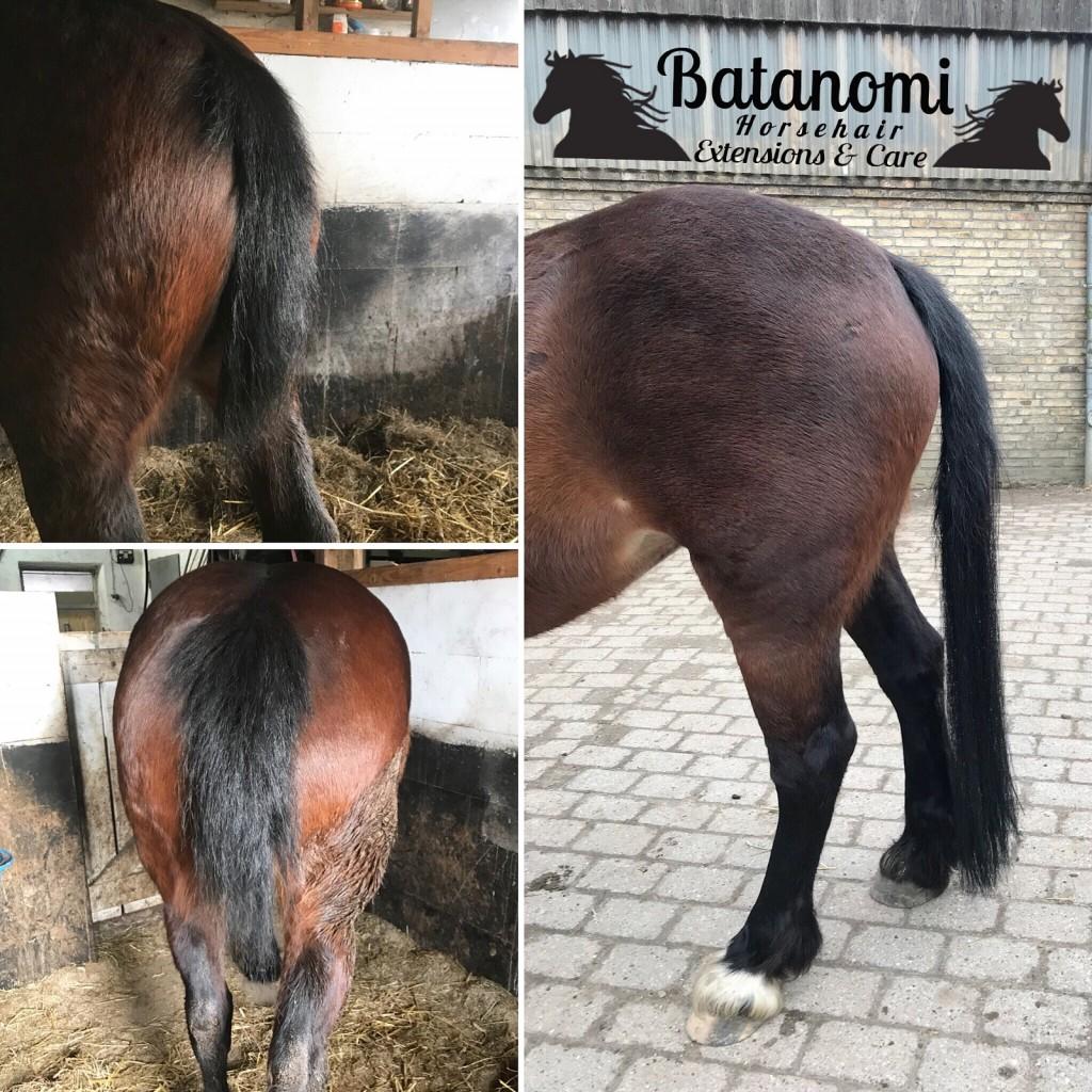 Tail Bonding Extensions Batanomi Pferde Extensions